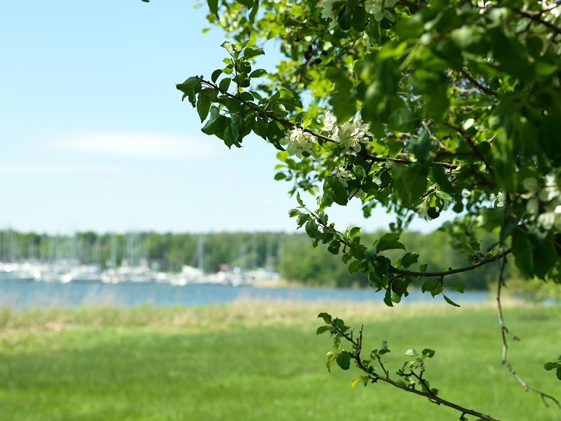 Download: Nära till småbåtshamn