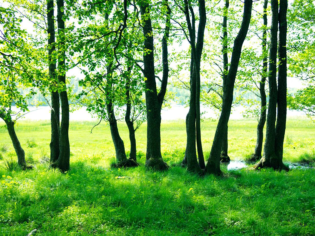 Download: Fina grönområden